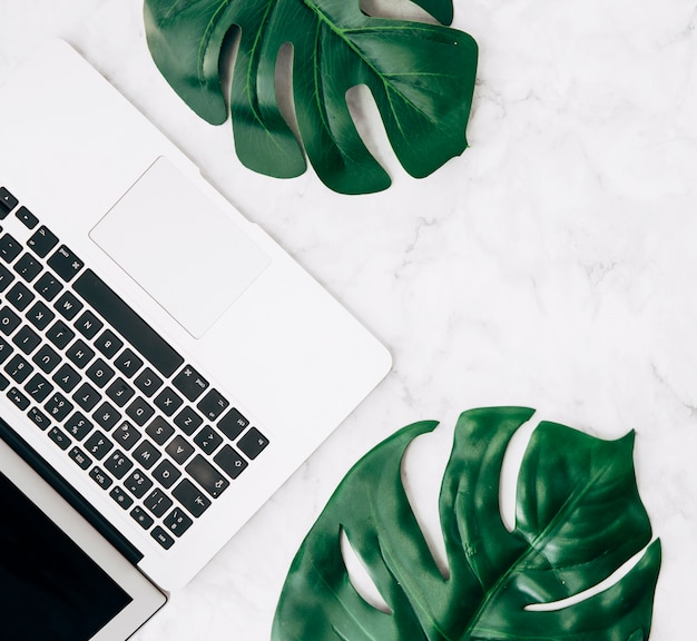 An elevated view of green monstera leaves with laptop on white desk