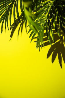 An elevated view of green palm leaves on bright yellow backdrop