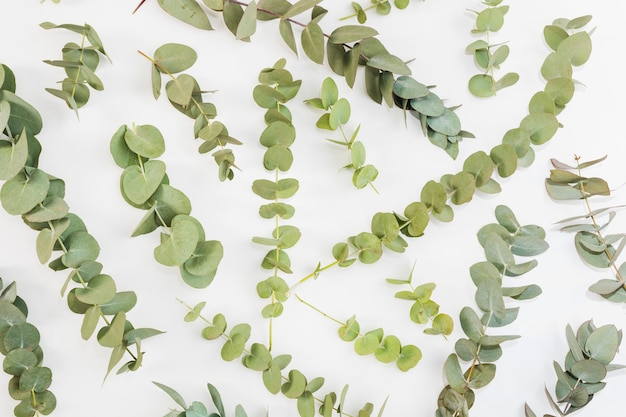 Elevated view of green twigs spread over white background