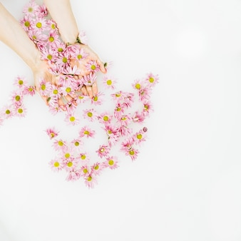 Elevated view of human hand with delicate fresh flowers