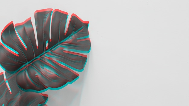 An elevated view of monstera leaf with red and turquoise light on white backdrop