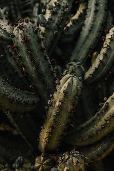 サボテンの植物の高台