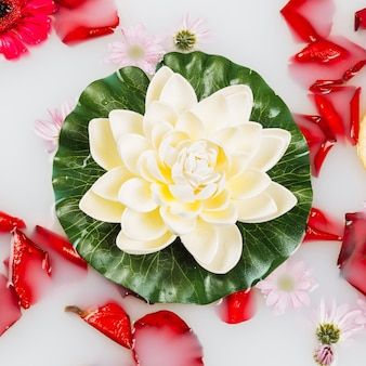 Elevated view of beautiful lotus surrounded by petals on milk