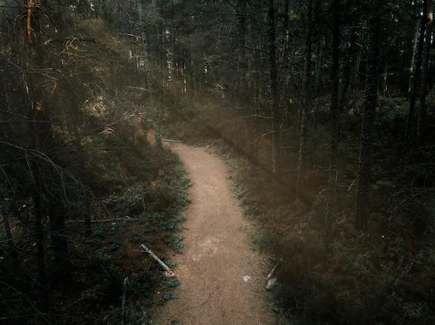 울창 한 숲에서 비포장 도로의 높은 볼