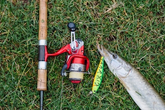 Elevated view of fishing rod with hook in the fish on green grass