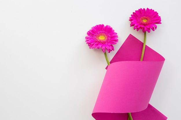 白い背景の上の丸まった紙とピンクのデイジーの花の立面図
