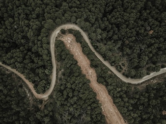 Elevated view of road surrounded by trees in forest