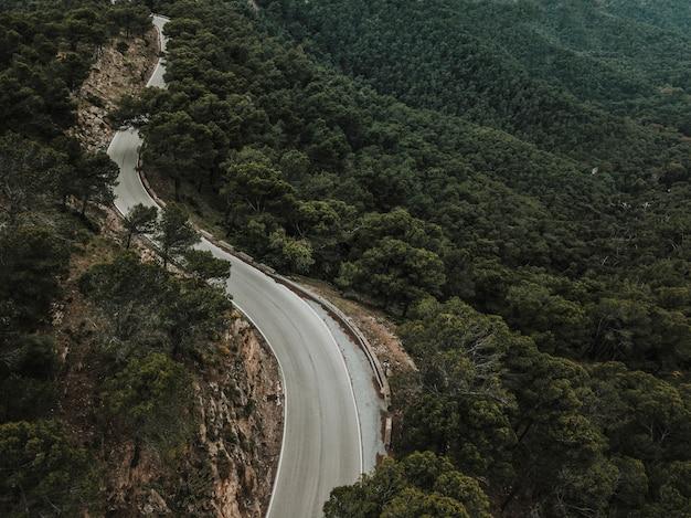 Повышенный вид на дорогу с деревьями, растущими в лесу
