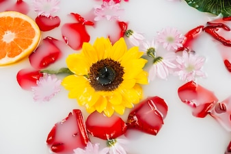 Elevated view of yellow flower with petals and grapefruit in spa bath with milk
