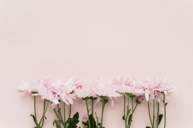 Elevated view of pink flowers on colored background