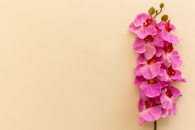 Elevated view of pink orchid flowers against beige background