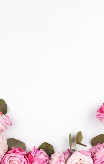 Elevated view of pink roses over white backdrop