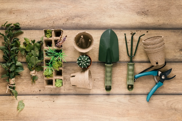 Elevated view of plant; rake; showel; peat tray; peat pot; pruner and succulent plant arranged in a row on table