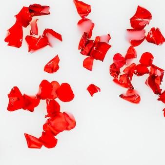 Vista elevata dei petali di fiori rossi su sfondo bianco