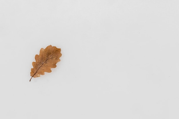 Elevated view of single autumn leaf on snowy background