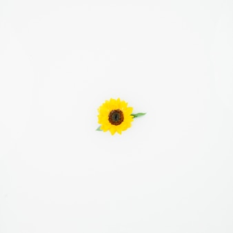 Elevated view of single yellow flower on white background