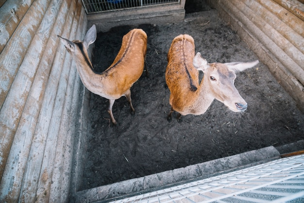 An elevated view of two deer in the zoo