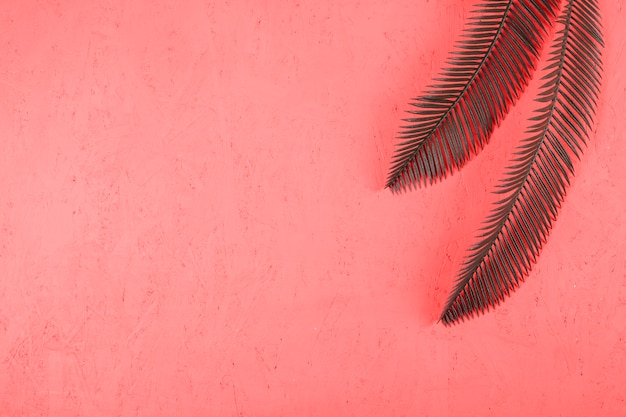 An elevated view of two green palm leaves on textured coral backdrop