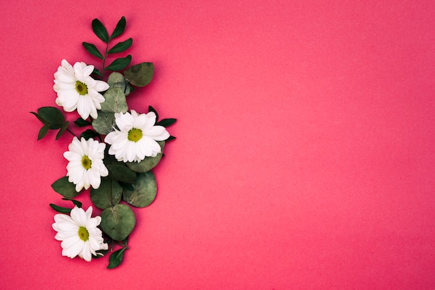 Elevated view of white flowers and leaf decorated on red background