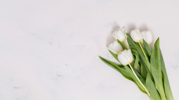 Elevated view of white tulip flowers over concrete background