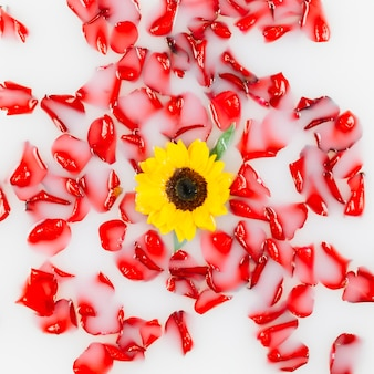 Elevated view of yellow flowers surrounded by red petals on milk