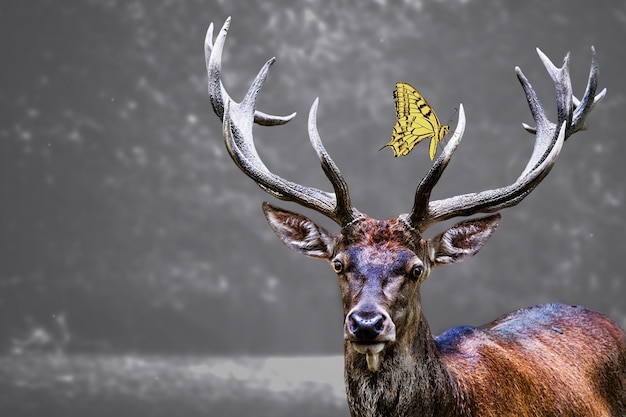 Голова лося и желтая бабочка на ней