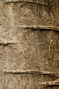 Embossed texture of the bark of oak close-up