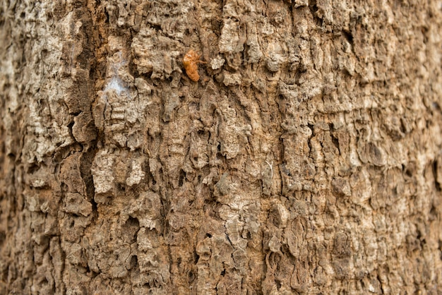 Embossed texture dry of the brown bark of a tree.