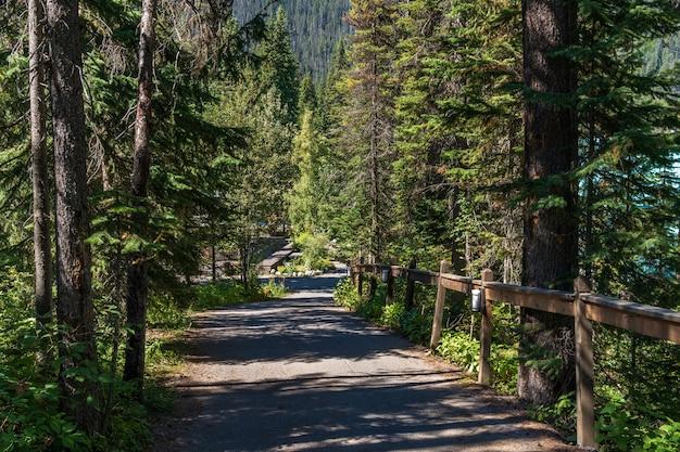 에메랄드 호수 산책로. yoho national park, canadian rockies, british columbia, canada.