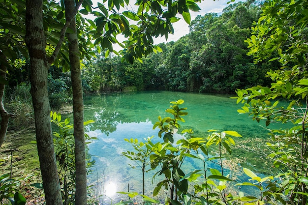 Emerald pool in mangrove forest at krabi in thailand.