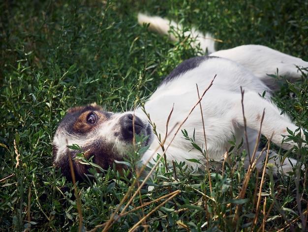 Emotional dog portrait.
