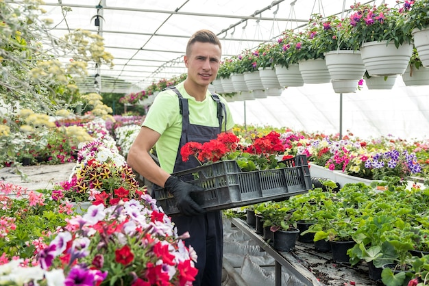 花の世話をする従業員は、植物の箱を運びます。温室で働く