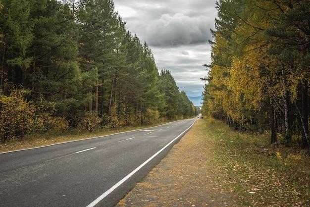 안개 낀 산까지 뻗어 있는 황금빛 단풍이 있는 가을 숲을 따라 빈 아스팔트 도로