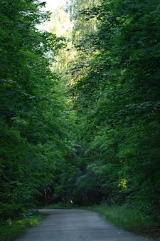 Empty asphalt road in summer forest, vertical
