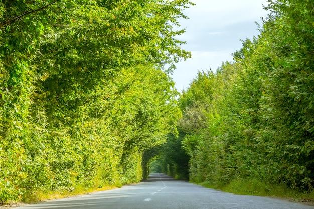 森の中の空のアスファルト道路。緑の枝がトンネルを形成した