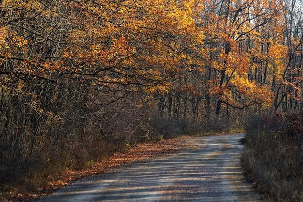 森の中の空の秋の舗装道路