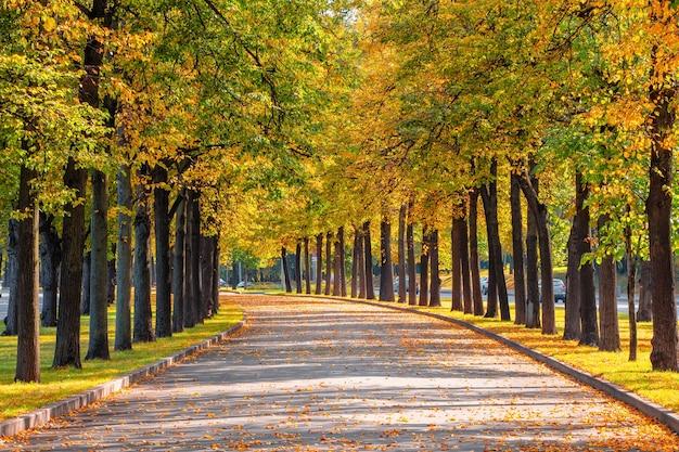 端に木が一列に並んでいる空の秋の道。モスクワ。