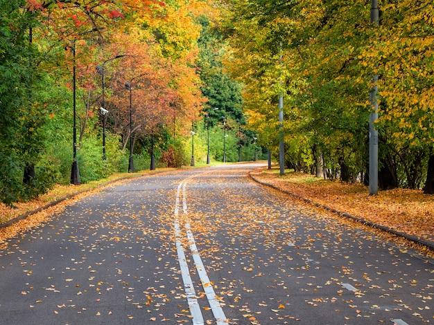 端に木が一列に並んでいる空の秋の道。そばが丘。モスクワ。