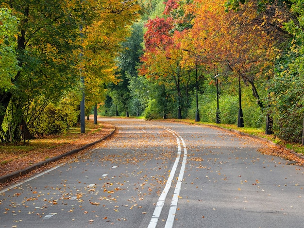 Empty autumn road with trees in a row on the edges.