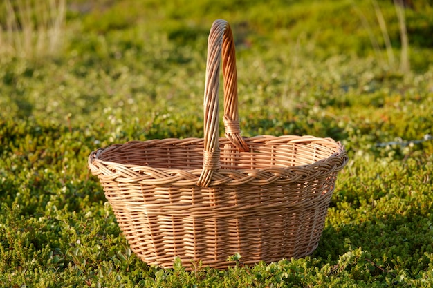 Empty basket on green meadow in sunlight