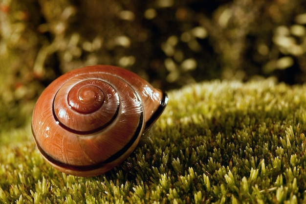 Empty beautiful and shiny snail's shell on a green moss