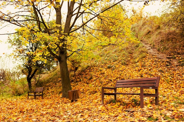 秋の市立公園のコピースペースの空のベンチ