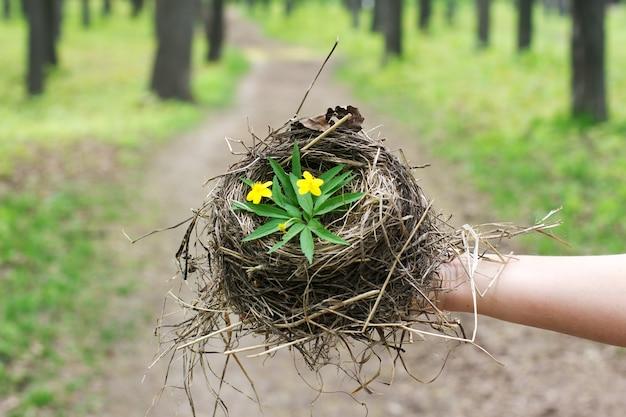Пустое птичье гнездо крупным планом символ семьи и дома