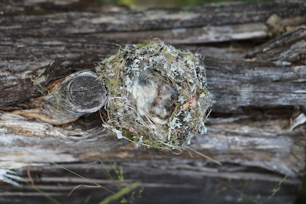 Empty birds nest with soft fluffy feathers concept of a warm comfortable home