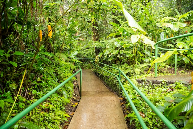 Empty boardwalk in natural lush rainforest