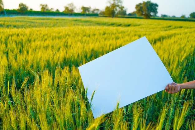 Empty cardboard in farmer hand, agricultural background