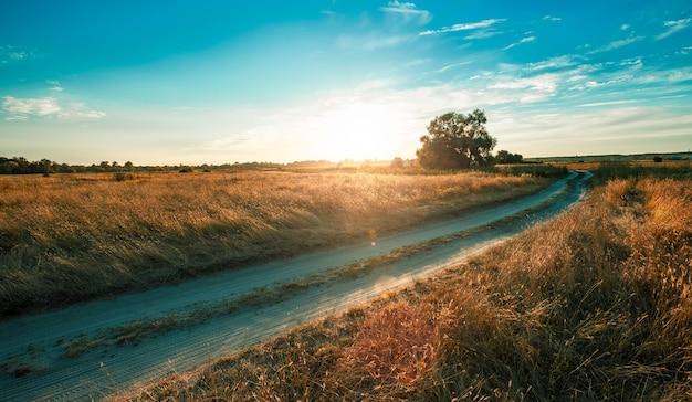 마른 잔디와 푸른 나무와 필드를 통해 빈 시골 도로