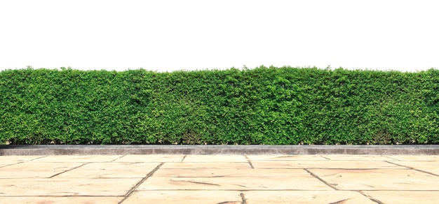 Empty floor concrete with green hedge wall on isolated.