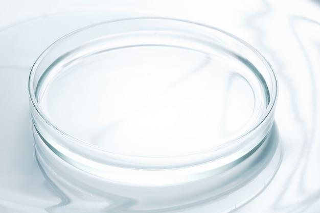 Empty glass perti dish, laboratory equipment
