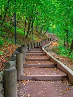 秋の空の緑の生態学的パス、ボトムアップビュー。モスクワ、ヴォロビヨーヴゴリー。